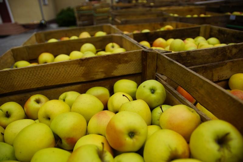 Jabłka z programu EMBARGO