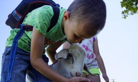 Wakacje z Wigilijnego Dzieła Pomocy Dzieciom